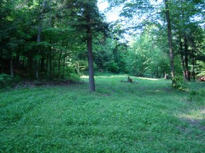 1 of my hidden foodplots