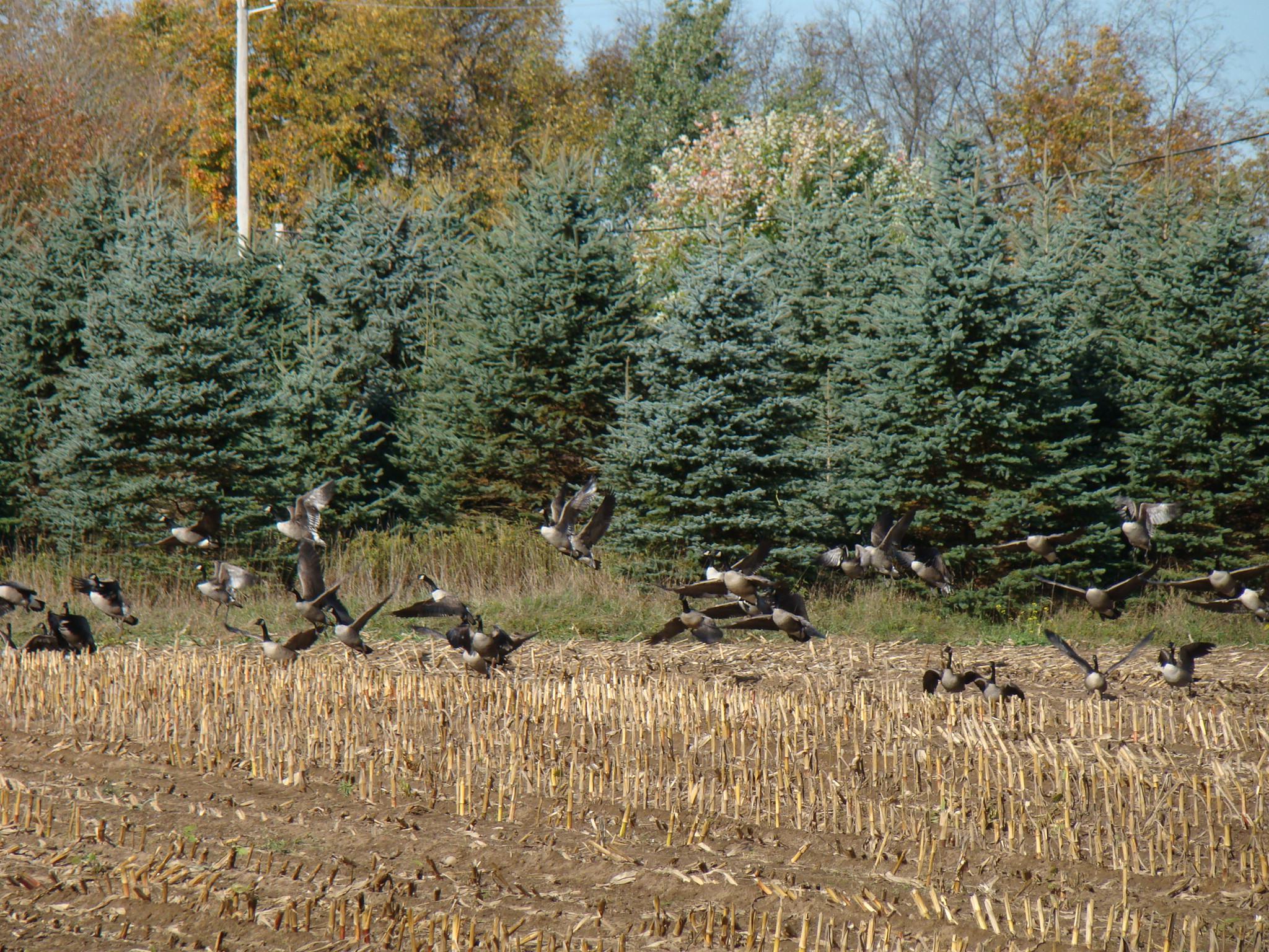 york huntingtactics hunting adriondack whitetails